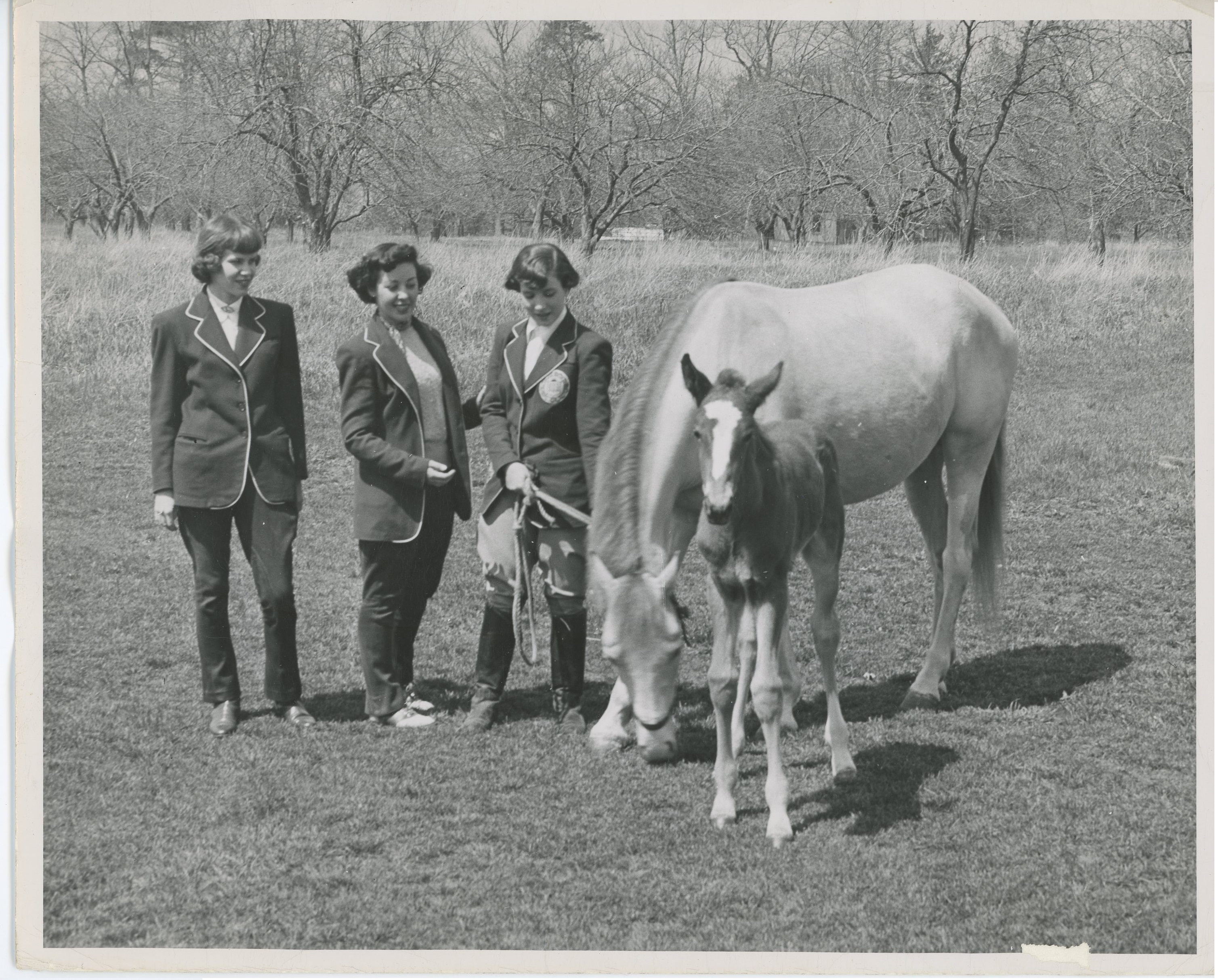Depiction of Three Mount Ida College students with a mare and foal
