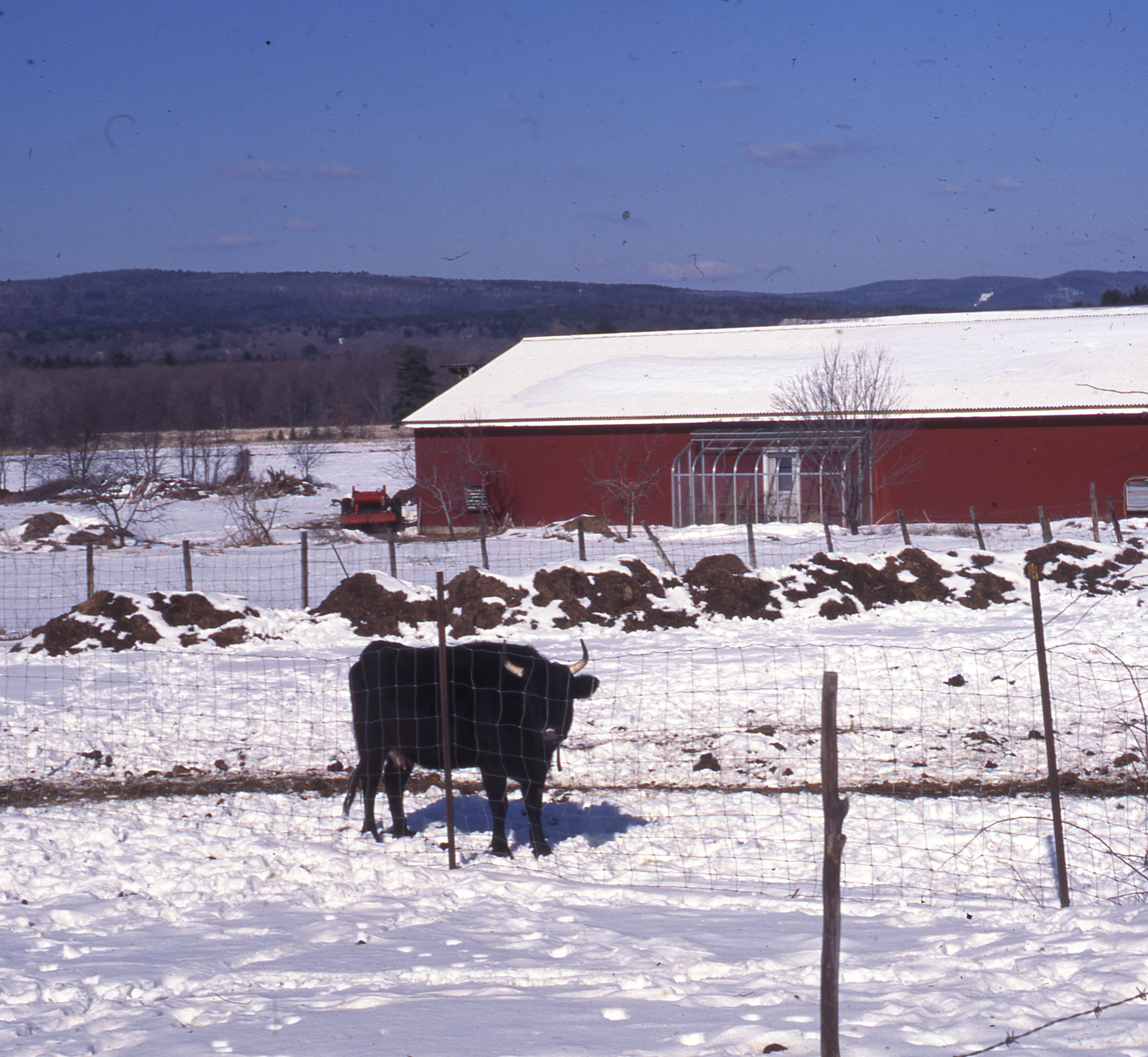 Image of Brookfield Farm, 1995