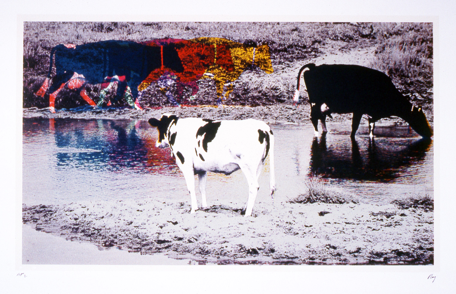 Image of John Roy, Three Cows