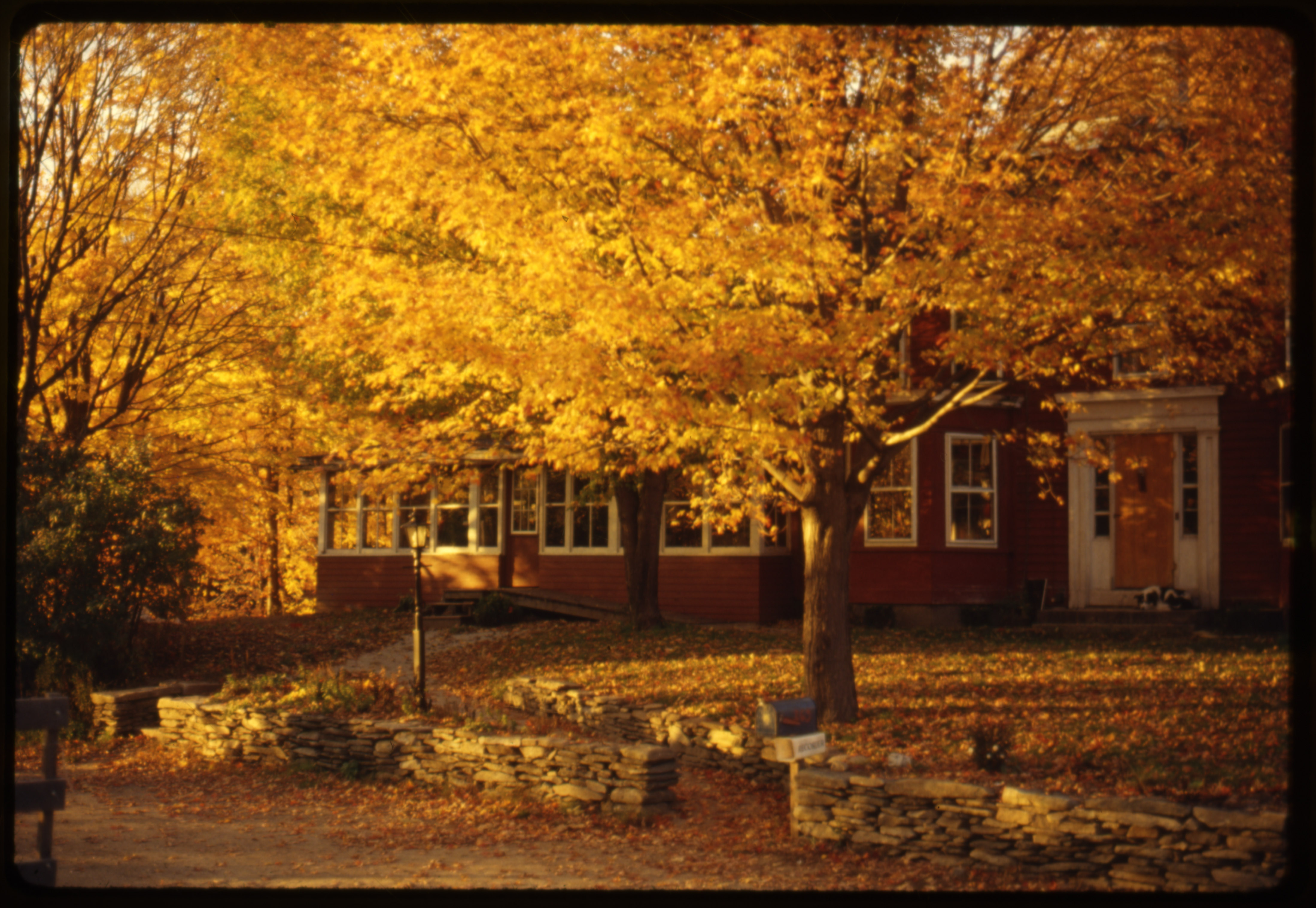 Image of The Farm in fall color, Oct. 1980