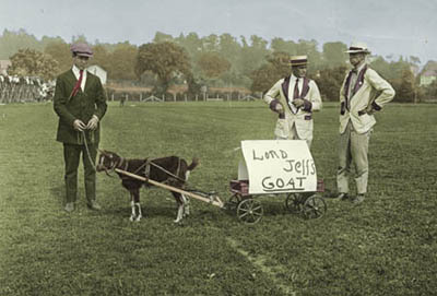 Goat cart at football game with Amherst College, ca.1913